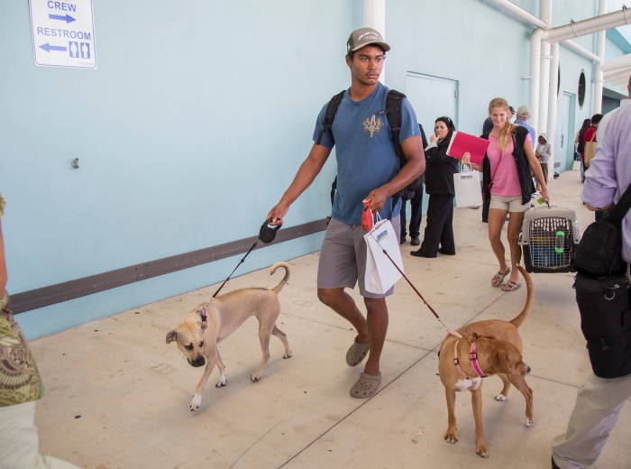 Pets evacuated from Puerto Rico, St. Croix and St. Thomas return to Port Everglades on board Royal Caribbean International's Adventure of the Seas on Tuesday, Oct. 3, 2017 in Fort Lauderdale, Fla. In addition to 3,400 people, the cruise line has evacuated 127 pets from the affected islands and delivered more than 13,050 pounds of pet food. (Jesus Aranguren/AP Images for Royal Caribbean)