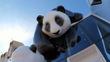 Panda Pandemonium on Ovation of the Seas: Royal Caribbean's Newest Crew Members Make Their Debut